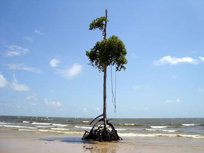 Vegetação típica com raízes a mostra