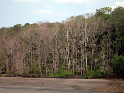 Vegetação típica da região
