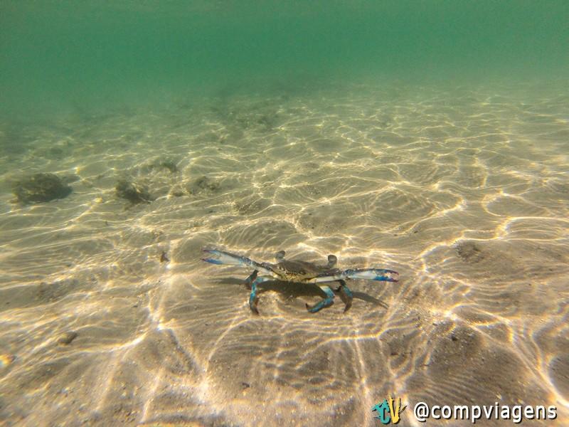 Siri na Praia dos Castelhanos
