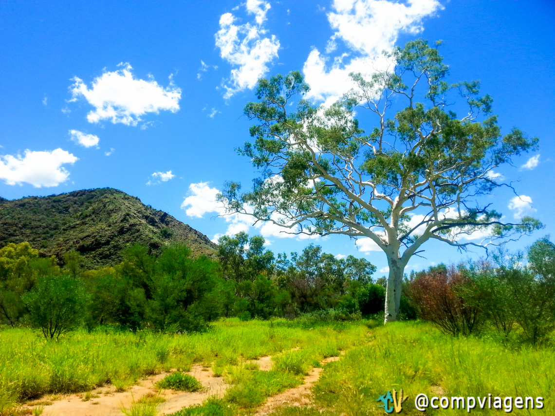 Maior Ghost Gum Tree no East MacDonnell Ranges