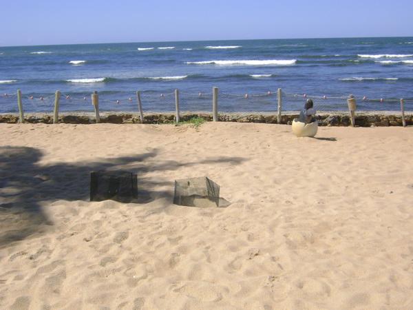 Local de desova das tartarugas marinhas