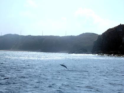 Golfinho visto durante passeio de barco