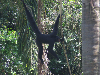 Macaco do zoológico