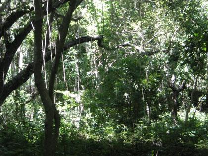 Floresta tropical seca no interior da Isla Zapatera, Lago Cocibolca, Nicarágua, 2010