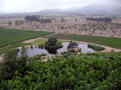 Vista dos vinhedos