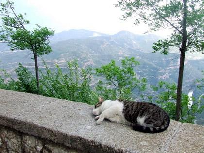 Nem os gatos resistem à beleza de Montserrat