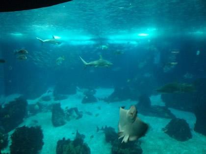 Aquário com uma diversidade incrível de animais marinhos