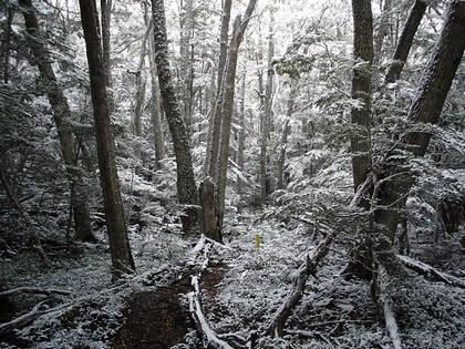 Parque Nacional Tierra del Fuego: a neve começa a cobrir o caminho que estou percorrendo