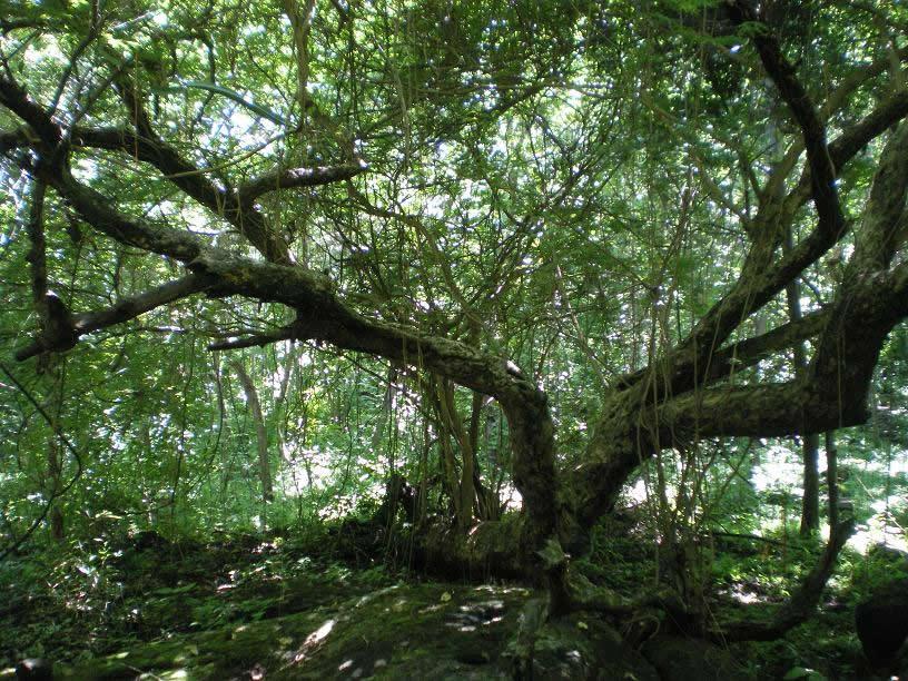 Rincão de Floresta Seca do Pacífico, no interior da Isla Zapatera