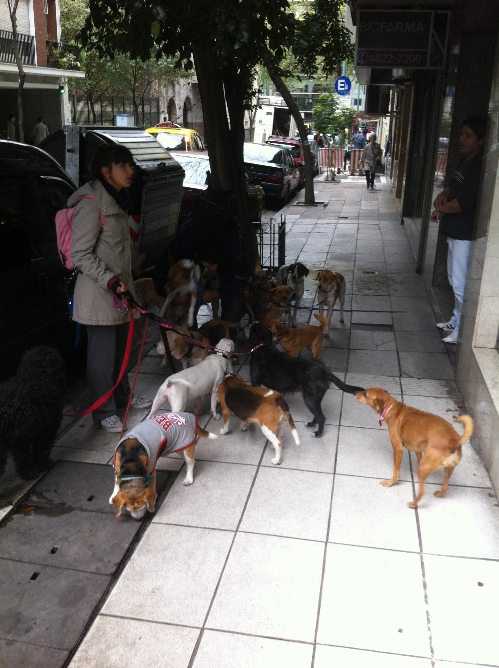 A cachorrada reunida