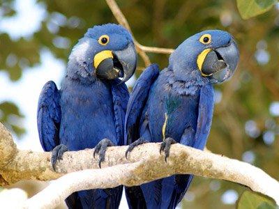 O Pantanal guarda o que o Brasil tem de mais exclusivo
