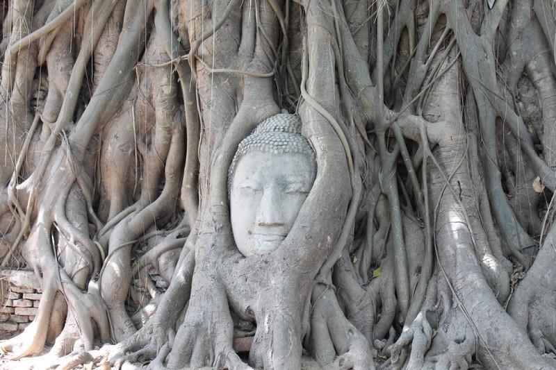 Cabeça de Buda presa à arvore em templo de Ayutthaya