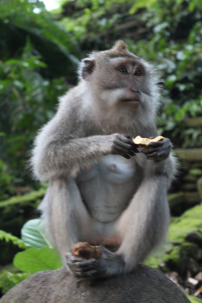 Macaquinho da Monkey Forest
