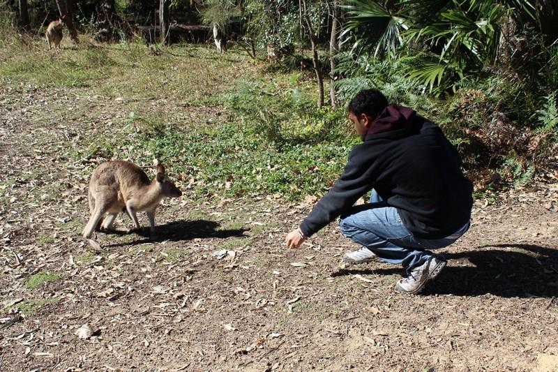Fred fazendo amizade com os cangurus à base de pão. Não façam isso!