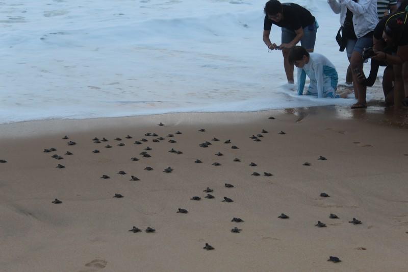 E lá vão elas buscar o seu lugar no mar