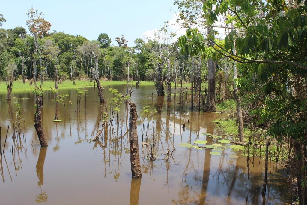 Parque Ecológico Janauari