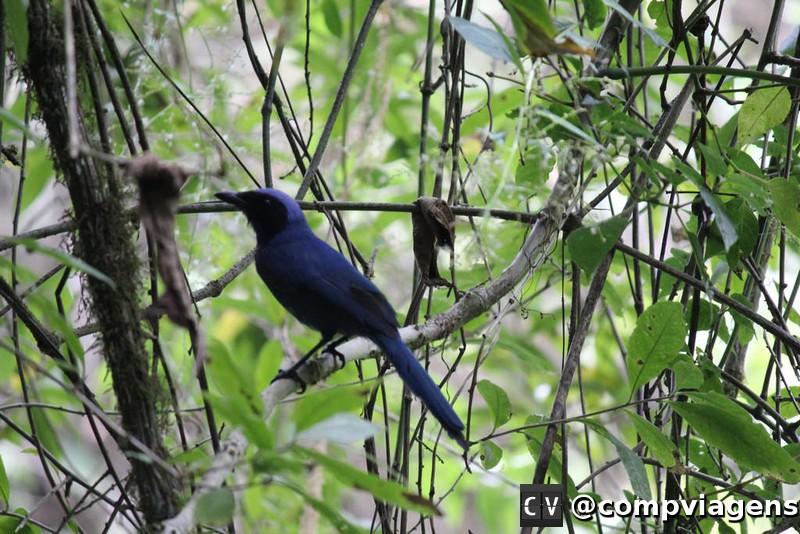 Pássaro no Valle de Cocora