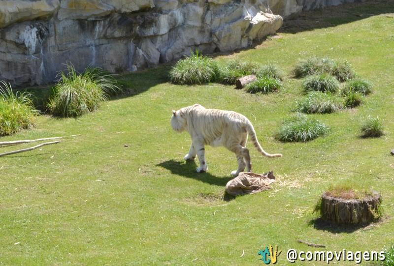 Zoológico do Bioparque Temaikèn
