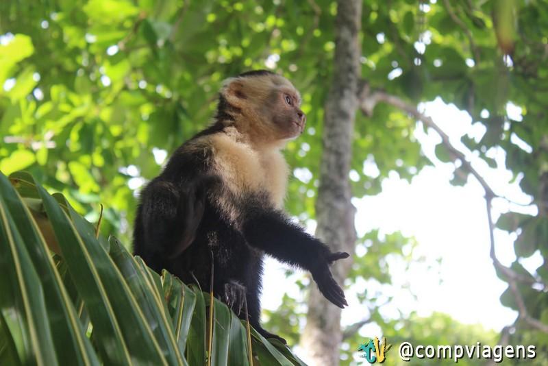 Macaco pedindo comida