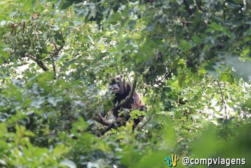 Macaco na trilha do vulcão Maderas