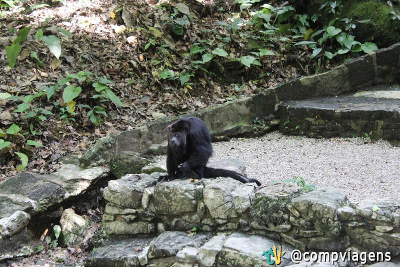 O macaco nada feliz, que tentou nos atacar