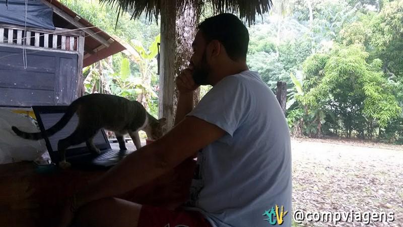 Gato em hostel na Colômbia atrapalhando o trabalho de Fred