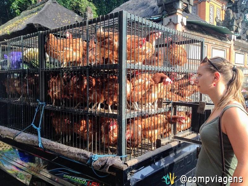 Caminhão de galinhas no mercado local