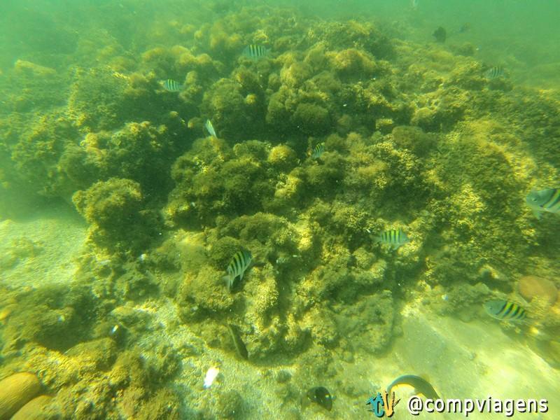 Peixinhos nas Piscinas de Castelhanos