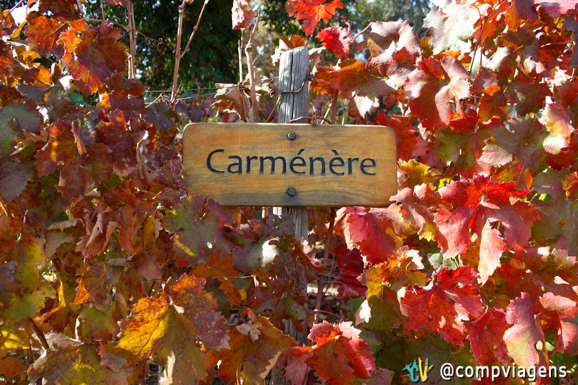 Videira Carménère