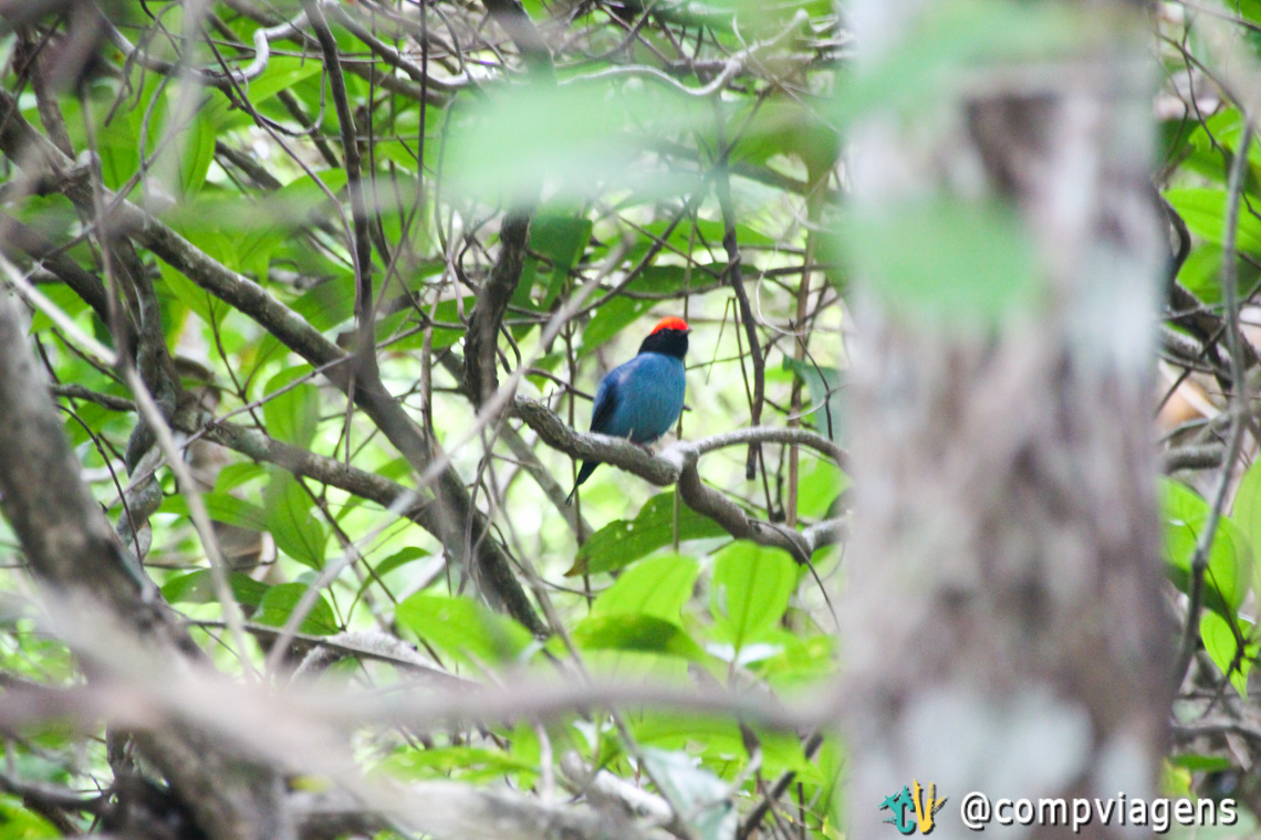 Pássaro visto na trilha para Lopes Mendes