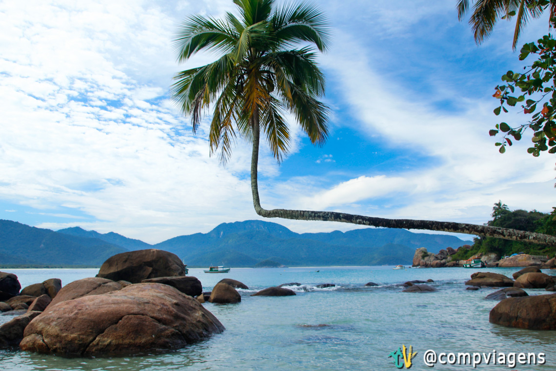O famoso coqueiro da Praia do Aventureiro