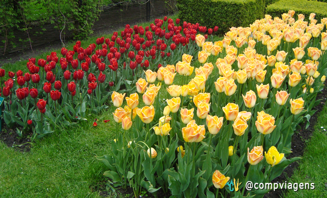 As tulipas são o destaque do parque que é o maior de flores do mundo